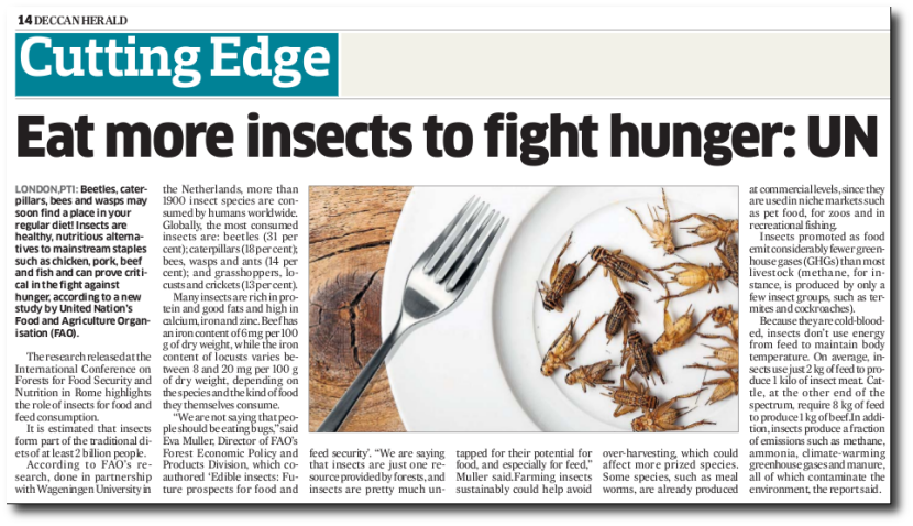 UN wants people to eat more insects to save the environment.